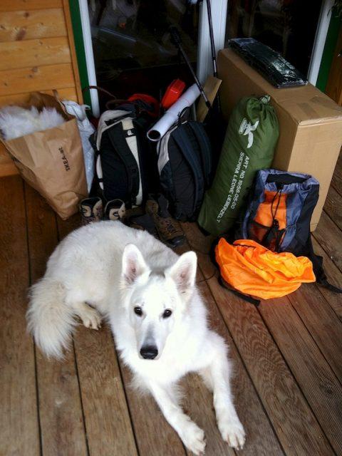 Shopping-Tour Leaf - Hund, Gepäck