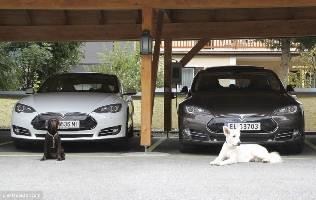 Hundeposing vor Tesla Model S